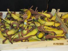 Dětský karneval dne 1.3. 2020 MADAGASKAR