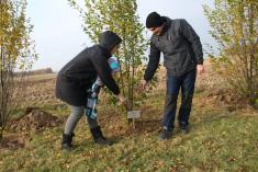 Sázení stromků dne 14.11.2020 pro nové občánky